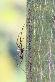 Free Spider On The Trunk Royalty Free Stock Photo - 3661185