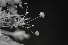 Free Infrared Photo – Tree, Skies And Cosmos Flower Stock Photography - 3661632