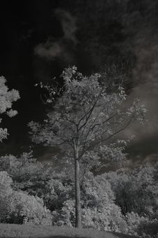 Free Infrared Photo – Tree, Skies And Cloud In The Pa Royalty Free Stock Photo - 3661635