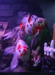 Aquarium FishS Stock Photo