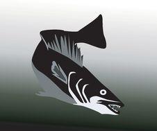 Free Fish Stock Image - 3663211