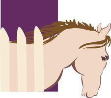 Free Horse Stock Image - 3663271