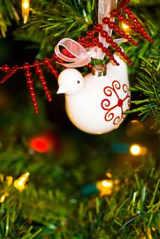 Free Dove Of Peace Royalty Free Stock Photography - 3663797