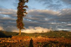 Free A Tree Bathing Moring Sunshine Stock Image - 3663941