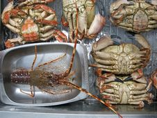Lobster And Large Crabs Royalty Free Stock Photo