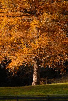 Free Autumn Tree Stock Images - 3665724