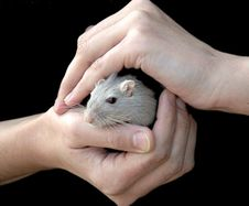 Free Hands Holding Mouse Royalty Free Stock Image - 3665846