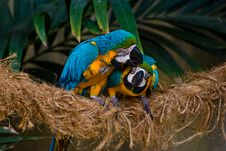 Free Parrots Royalty Free Stock Photography - 3666347