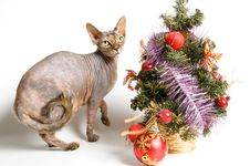 The Cat Meets New Year Stock Photography