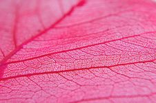 Free Closeup Of Dried Red Leaf Stock Photo - 3668640