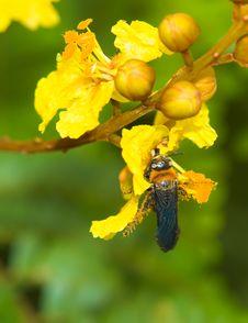 Free Wasp Royalty Free Stock Photos - 3669508