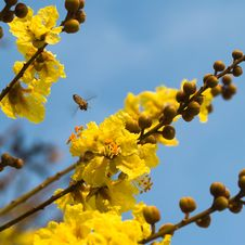 Free Bee In Blue Sky Royalty Free Stock Photos - 3669518