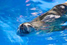 Free Sea Lion Stock Image - 3669841