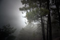 Free Forest Foggy Dawn Royalty Free Stock Images - 36617239