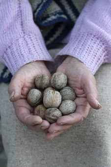 Free Old Woman Holding A Handful Of Walnuts Stock Image - 36610191
