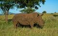 Free Rhino Royalty Free Stock Photos - 36627178