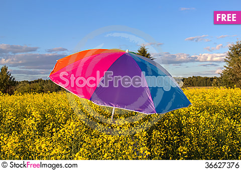Free Colorful Umbrella Royalty Free Stock Image - 36627376