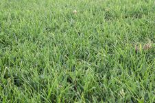Free Green Grass Field Stock Images - 36624904