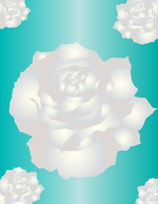 Free White Roses Royalty Free Stock Image - 36625876