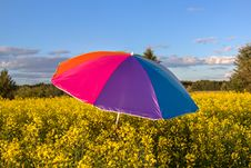 Free Colorful Umbrella Royalty Free Stock Image - 36627376