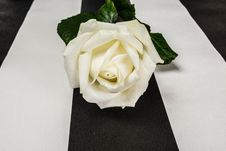 Free White Rose Stock Photography - 36632182