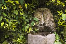 Free Fountain In Thicket Of Bushes Stock Images - 36632484