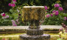 Free Antique Fountain On Background Of Roses Royalty Free Stock Photo - 36632925