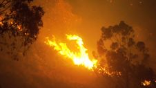 Free Bushfire Stock Photos - 36637243