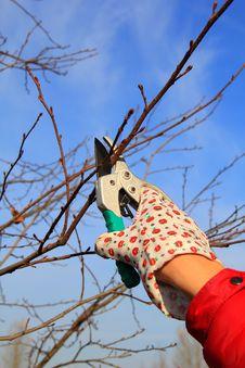 Free Hand In Glove With Gardener Shears Stock Photo - 36643730