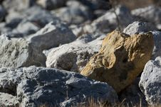 Free Standing Out In A Crowd Of Stones Royalty Free Stock Photography - 36644827