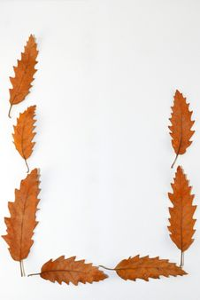 Free Leaves Frame Royalty Free Stock Images - 36645939
