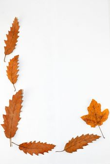 Leaves Frame Stock Photo
