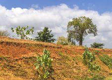 Free Kenya Vegetation Royalty Free Stock Photos - 36649088