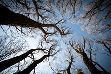 Free View Of The Trees From Below Stock Image - 36657451