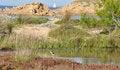 Free Italy Sardinia Sea And Bird Royalty Free Stock Image - 36660406