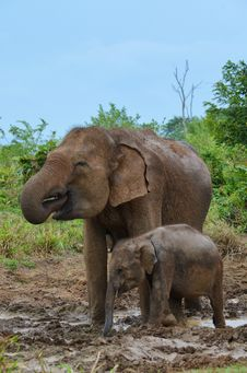 Free Mother And Baby Elephant Drinking Water Royalty Free Stock Photography - 36669637