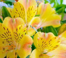 Free Beautiful Yellow Flowers Background Royalty Free Stock Photo - 36669775