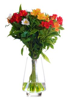 Free Beautiful Coloured Flowers In The Glass Vase Isolated On White Stock Photo - 36669830