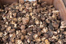Free Shiitake Mushroom Stock Photography - 36671352