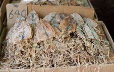 Free Dried Squids In Thailand Stock Photos - 36671423