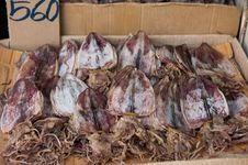 Free Dried Squids In Thailand Royalty Free Stock Photography - 36671447