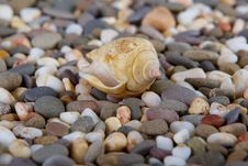Free Pebbles On Ocean Shore And Conch Stock Photos - 36672153