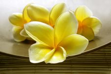 Free White Yellow Frangipani Royalty Free Stock Photo - 36678885