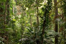 Free Daintree Royalty Free Stock Images - 36681989