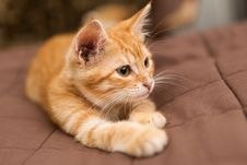 Small Kitten Lie On The Bed Royalty Free Stock Photos