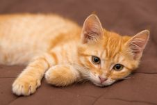Small Kitten Lie On The Bed Royalty Free Stock Photo