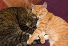 Free Friendship Of The Two  Cats Stock Images - 36682354