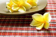 Free White Yellow Frangipani Royalty Free Stock Photography - 36682737