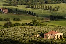 Free Olive Farm In Toscana Royalty Free Stock Photo - 36683245
