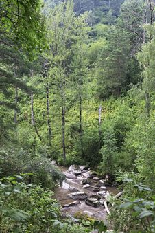 Belokurikha River In The Forest On The Hillside Sinyuha. Stock Photography